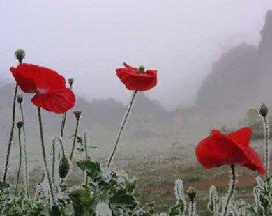 Tận hưởng mùa đông ở 4 điểm đến tại Việt Nam