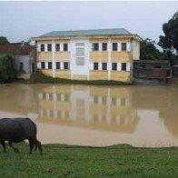 Trường học thành... ao làng
