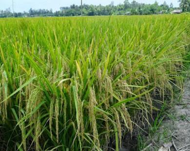 Cấp bách hỗ trợ bệ đỡ nông nghiệp