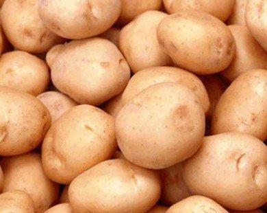 New Zealand xúc tiến xuất khẩu khoai tây sang Việt Nam