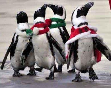 Chim cánh cụt Malaysia đến công viên nước của Việt Nam