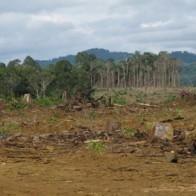 Gia tăng số lượng các tổ chức vi phạm luật đất đai