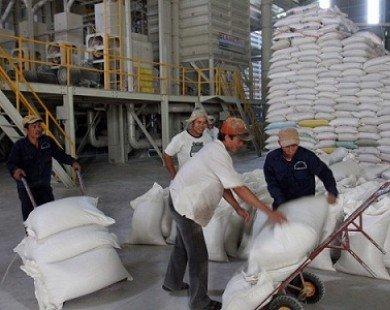 8.000 tỷ đồng tín dụng ưu đãi để thu mua tạm trữ gạo
