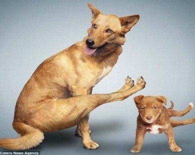 Chùm ảnh hài hước khi chó mèo cũng tập Yoga