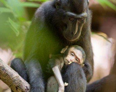 Xúc động với hình ảnh khỉ mẹ ôm con đã chết