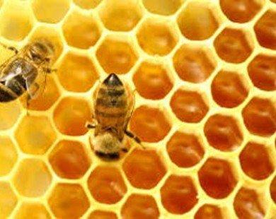 Phân biệt mật ong thật và giả như thế nào?