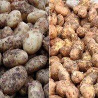Thủ thuật nhận biết rau củ nguồn gốc Trung Quốc