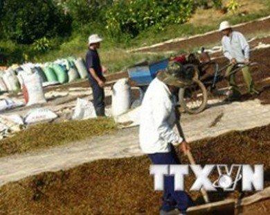 VietinBank dành 3.000 tỷ đồng ưu đãi lãi suất cho vay nông sản