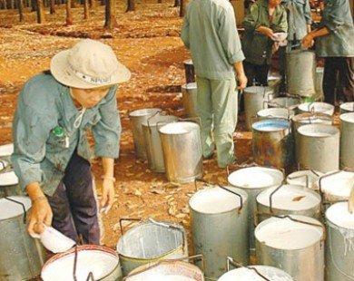 Cao su Đồng Phú: Giá cao su tăng nhẹ, 8 tháng lãi gộp 254 tỷ đồng