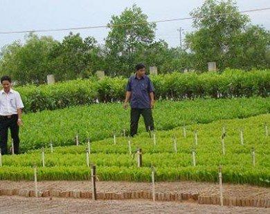 Miễn giảm tiền thuê đất sản xuất nông lâm nghiệp