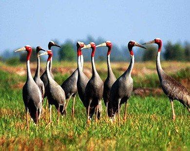 Những vườn quốc gia nổi tiếng đẹp nhất Việt Nam