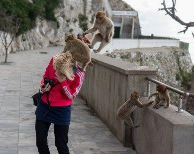 Phượt thủ cảnh báo nạn khỉ móc túi du khách ở Bali