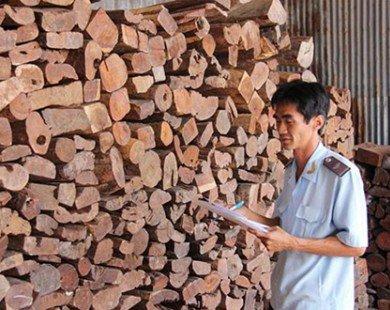 Giảm dần việc nhập các loại gỗ quý
