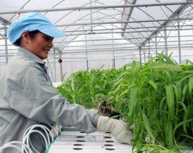 Lễ ký kết cung ứng nông sản thực phẩm an toàn: Nhân lên nhiều địa chỉ xanh, sạch!