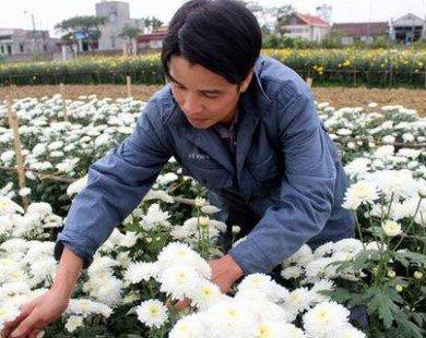 Nhà nông đất Cảng ứng dụng đèn chiếu sáng vào trồng hoa