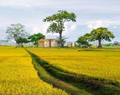 Tour du lịch đồng quê hoài niệm hút khách đến Khánh Hòa