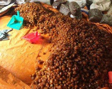 Phát hiện nhiều tấn mứt bẩn ở Sài Gòn chuẩn bị bán ra thị trường