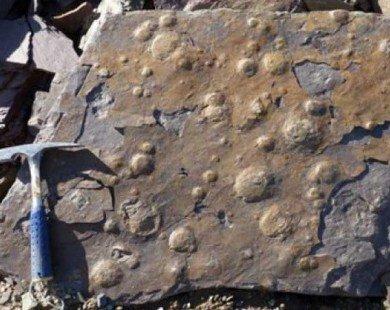 Phát hiện hóa thạch sinh vật sống cách đây 545 triệu năm