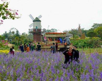 Làng hoa Nhật Tân rộn ràng du khách check-in dịp giáp Tết