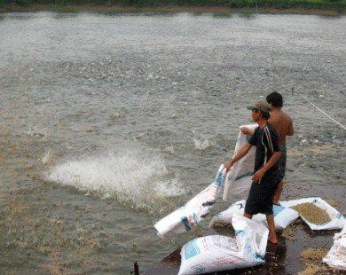 Người Việt sắp được… ăn cá tra!
