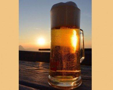 Tác dụng của bia gừng trong điều trị ung thư và viêm khớp