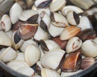 Cách làm ngao sạch cát, nấu món nào cũng ngon