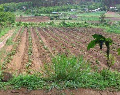 Miễn, giảm thuế sử dụng đất nông nghiệp