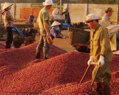 Việt Nam trở thành nước xuất khẩu cà phê lớn nhất thế giới?