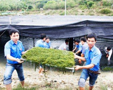 Việt Nam có thể sản xuất được 2 triệu tấn rong biển