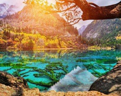 """""""Lạc trôi"""" vào những khu rừng đẹp nhất thế giới"""
