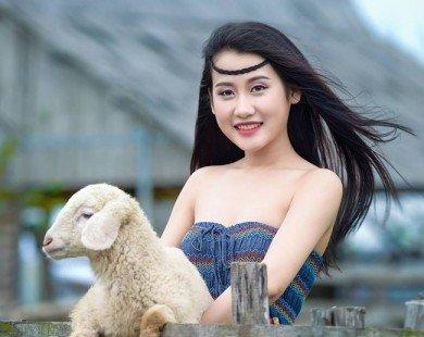 Có một đồng cừu đẹp như mơ ngay ngoại thành Hà Nội