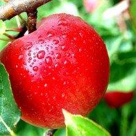10 loại thực phẩm tốt nhất cho sức khỏe