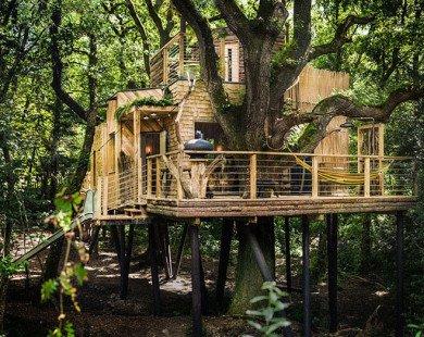 Ai cũng ước một lần được nghỉ trong khách sạn trên cây sang chảnh này