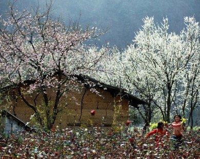 Tìm về Mộc Châu – Miền đất bốn mùa hoa nở