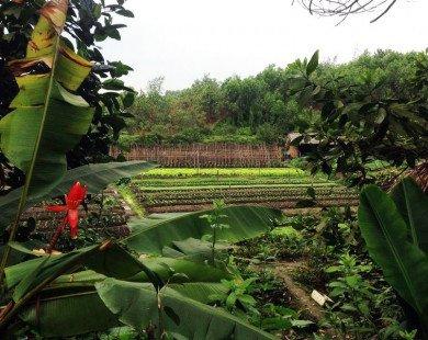 Khu du lịch sinh thái Thái Hải – Ốc đảo giữa rừng xanh Thái Nguyên