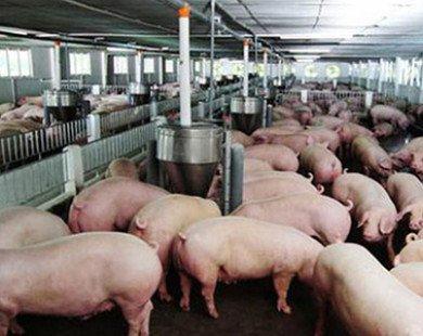 Thịt lợn rẻ hơn rau, Bộ Nông nghiệp
