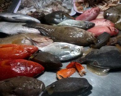 Hấp dẫn hải sản tươi rói ở chợ đêm Lý Sơn