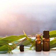 Những loại thảo dược có tác dụng trị bệnh
