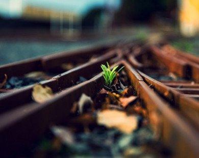 Sự thật về tính cách, niềm mơ ước và thái độ đối với cuộc sống ẩn dấu trong bạn