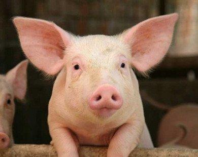 """""""Chưa bao giờ nông sản và thịt lợn dư thừa thế này!"""""""