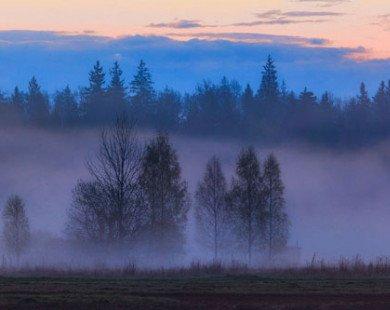 Khung cảnh ma mị trong khu rừng nguyên sinh cuối cùng ở châu Âu