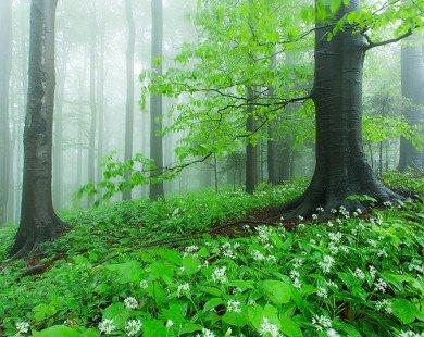 Ngẩn ngơ với phong cảnh tuyệt đẹp nơi biên giới Ba Lan – Slovakia