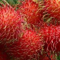 Chôm chôm chín ép do hóa chất tràn lan: Cách đơn giản để phân biệt