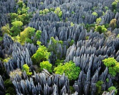 Mê hoặc vẻ đẹp siêu thực của 12 khu rừng kì bí nhất hành tinh