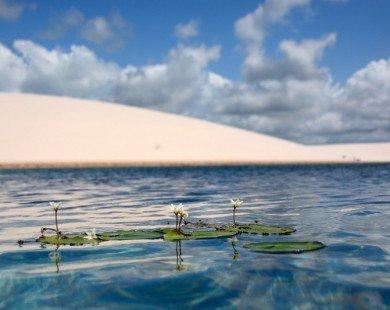 """""""Thiên đường"""" tuyệt đẹp giữa sa mạc chỉ xuất hiện vài tháng trong năm"""