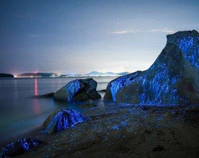 Chiêm ngưỡng vẻ đẹp huyền ảo của 5 bờ biển phát quang vào ban đêm