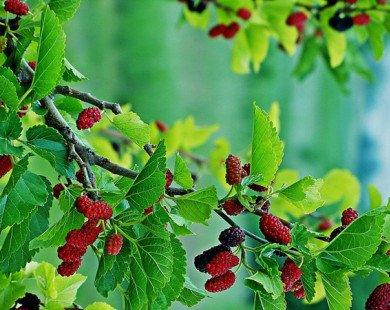 Những loại cây không nên trồng trước cửa nhà