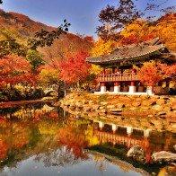 Ngẩn ngơ ngắm lá vàng lá đỏ ở 5 điểm đến mùa thu tại Hàn Quốc