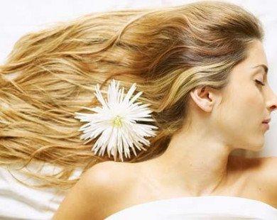 Tổng hợp các phương pháp tự nhiên giúp phục hồi tóc khô