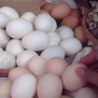 Bí ẩn đằng sau những quả trứng gà ta rẻ bán đầy chợ